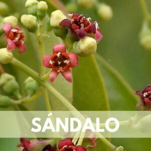 sandalo res600 — Humos.cl