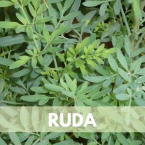 ruda res600 — Humos.cl