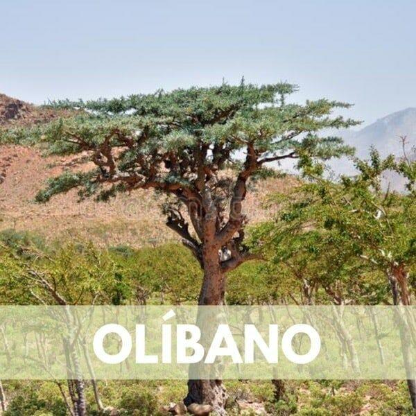 olibano res600 — Humos.cl