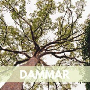 dammar res600 — Humos.cl
